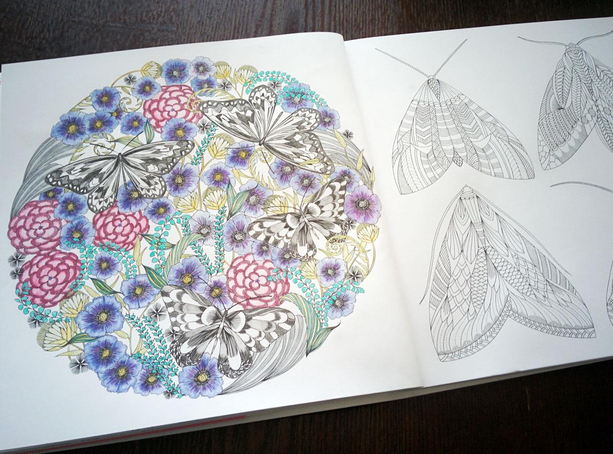 動物たちのぬり絵ブック 蝶